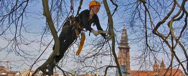 Baumpflege  Baumpflege - Baumpflege Treeo